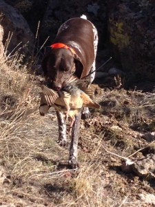 chukar retrieve